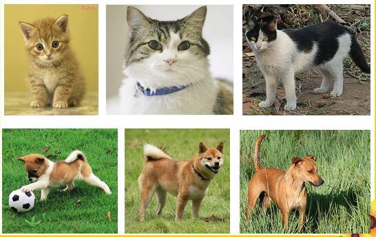 Tập làm văn 4 Tuần 30 trang 119 Luyện tập quan sát con vật